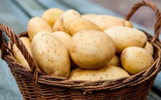Картофель — содержание БЖУ, калорийность и полезные свойства