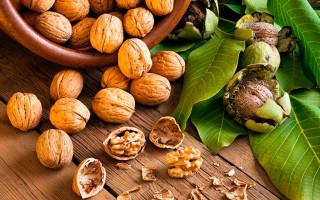 Грецкий орех — калорийность, БЖУ и полезные свойства
