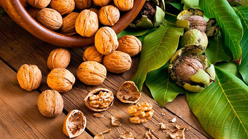 Грецкий орех - калорийность, БЖУ и полезные свойства