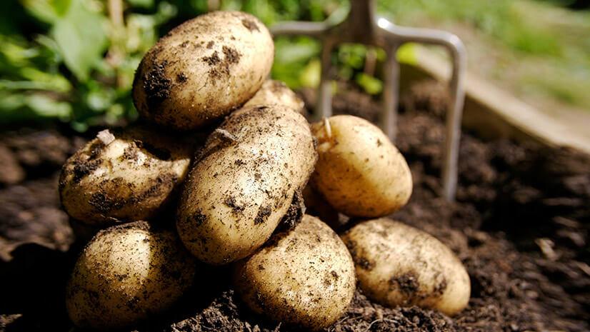 Как правильно выбрать и хранить овощ?
