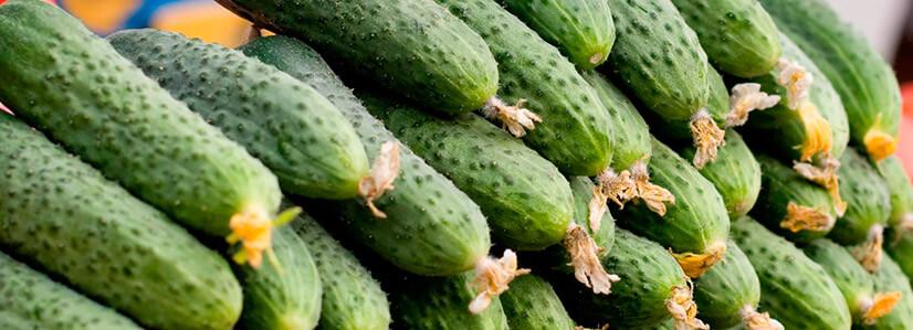Как правильно выбрать овощ?