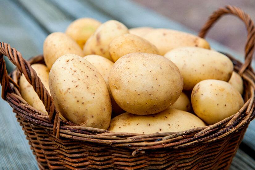 Картофель - содержание БЖУ, калорийность и полезные свойства
