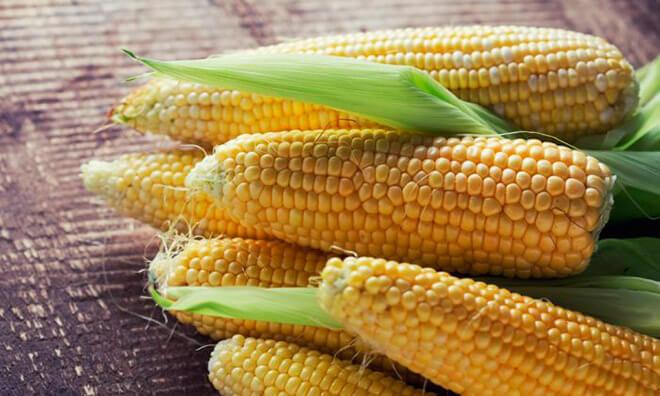 Как правильно выбрать кукурузный початок?